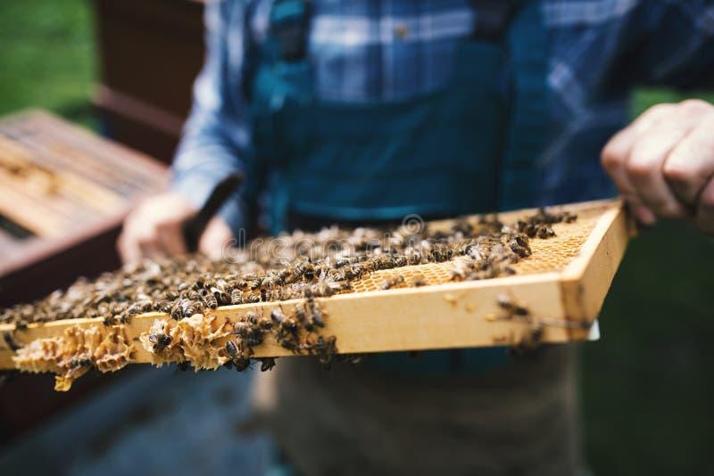 Beekeper werkt met honingraten wat volledig door bijen wordt behandeld Detail op apiarist stock foto
