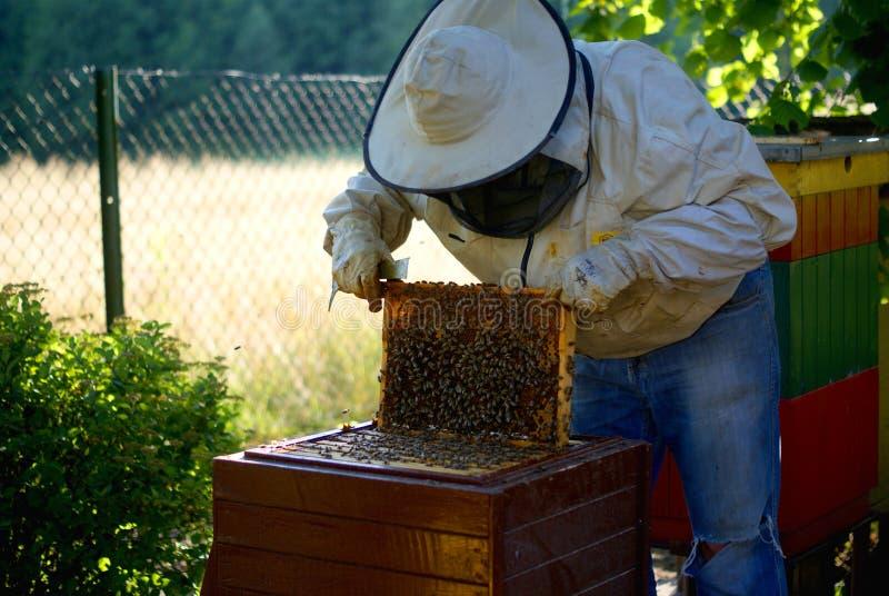 Beekeping och beekeeper royaltyfria foton