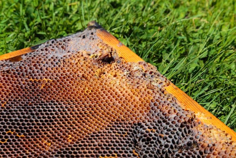 Download Beeld In Close-up Van Een Honingraat Op Een Gras Stock Afbeelding - Afbeelding bestaande uit bijen, voedings: 54075193