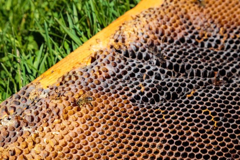 Download Beeld In Close-up Van Een Honingraat Op Een Gras Stock Afbeelding - Afbeelding bestaande uit bruin, bijen: 54075423