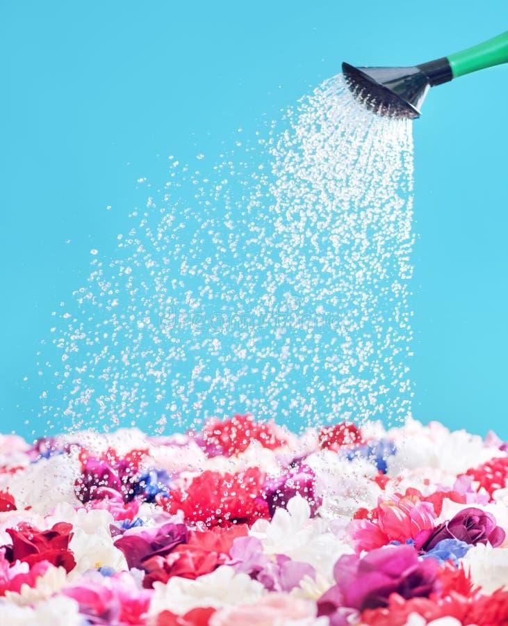 Beeld die water gevend de kleurrijke bloemen voorstellen stock foto's