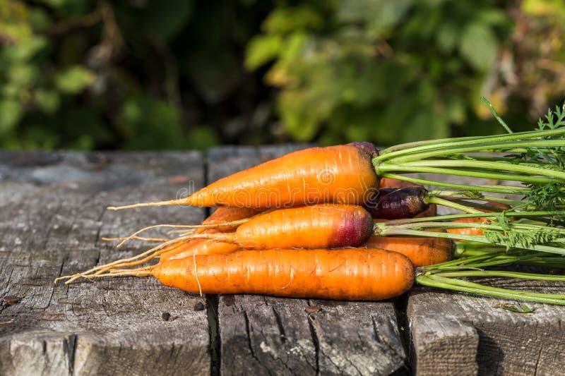 Beeld met een wortel stock afbeeldingen