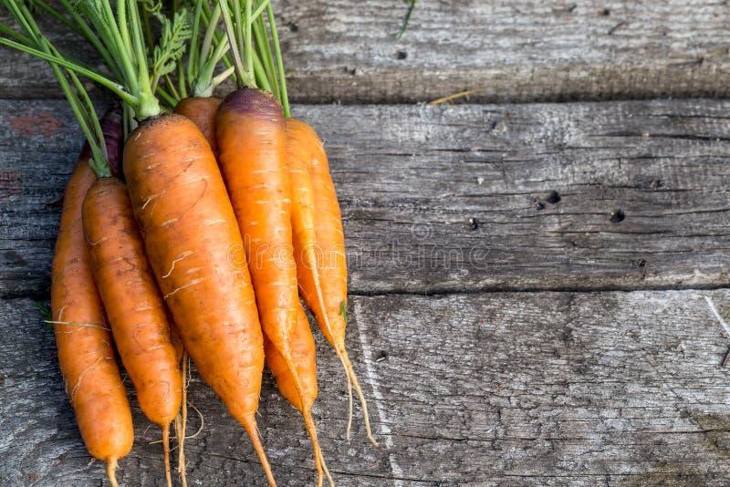 Beeld met een wortel stock afbeelding