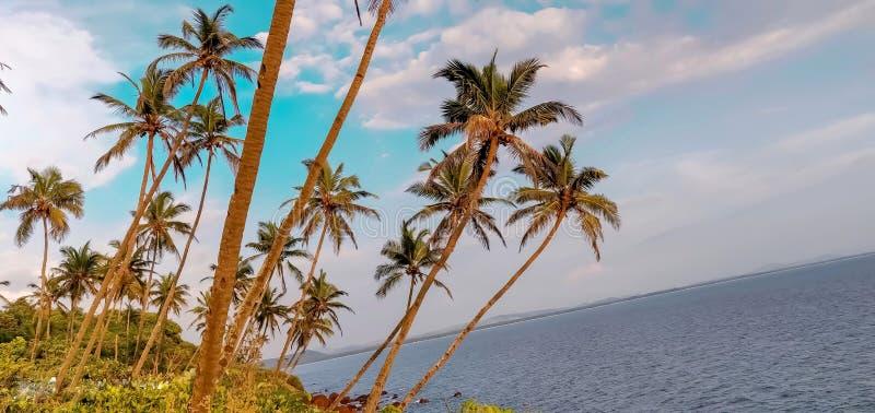 Beeld perfecte kust met kokosnotenbosje en blauwe hemel stock fotografie