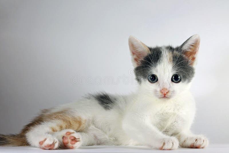 Beeld van aanbiddelijke kleine kat die camera bekijken stock afbeeldingen