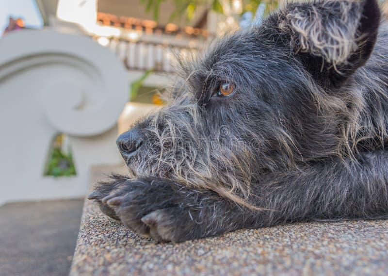 beeld van bruine leuke hond op dagtijd stock foto
