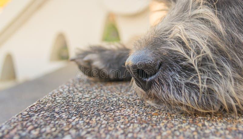 beeld van bruine leuke hond op dagtijd royalty-vrije stock afbeeldingen
