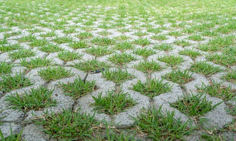 Beeld van concrete blokvloer met groen gras stock foto's