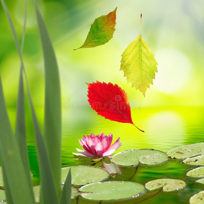 Beeld van dalende de herfstbladeren en een lotusbloembloem stock fotografie