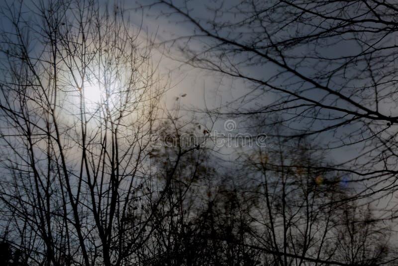Beeld van de volle maan onder de takken van de bomen royalty-vrije stock foto's