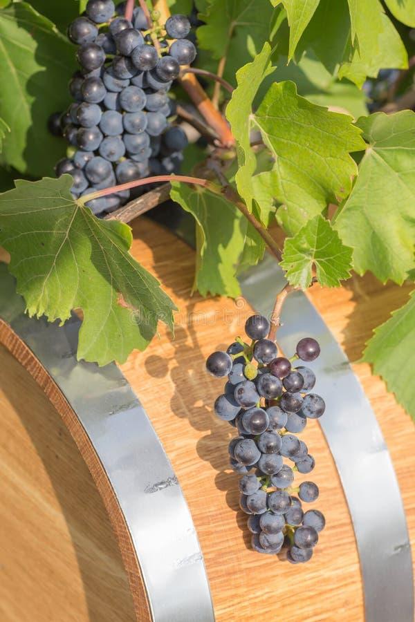Beeld van druiven op een vat stock afbeelding