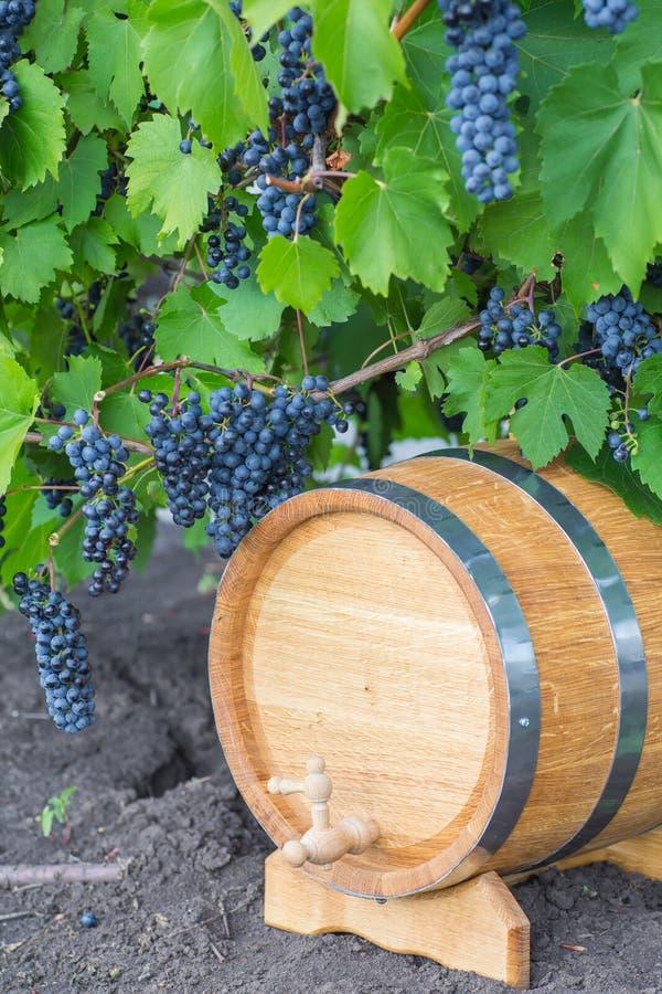 Beeld van druiven op een vat royalty-vrije stock fotografie