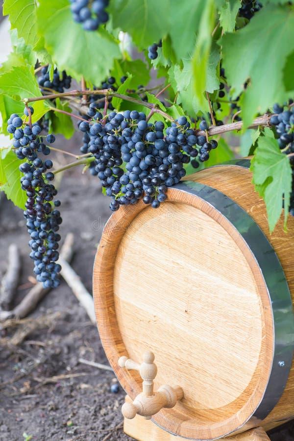 Beeld van druiven op een vat royalty-vrije stock foto's