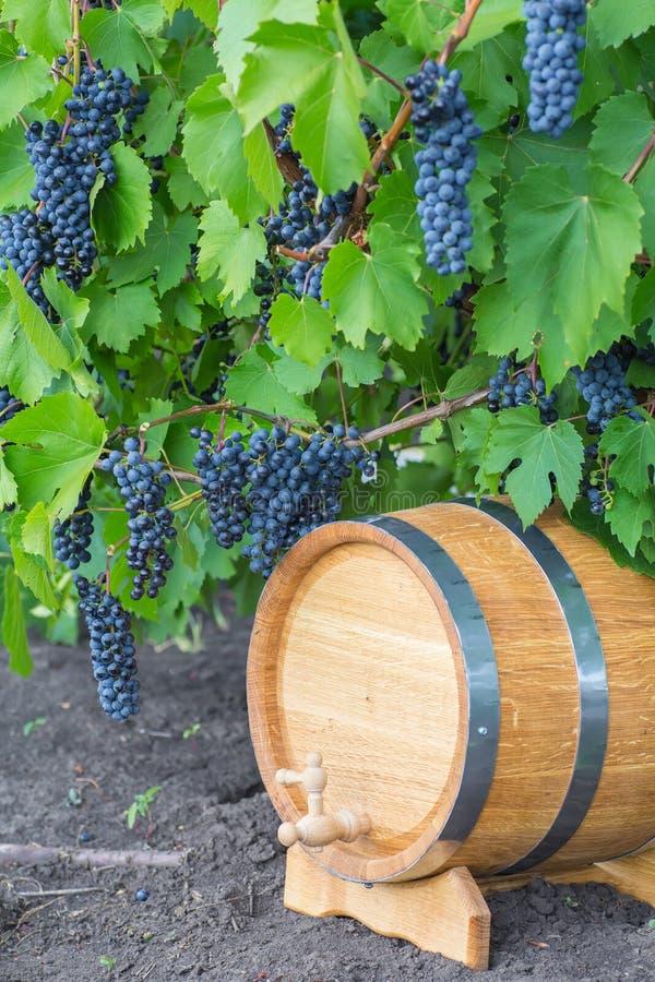 Beeld van druiven op een vat stock fotografie