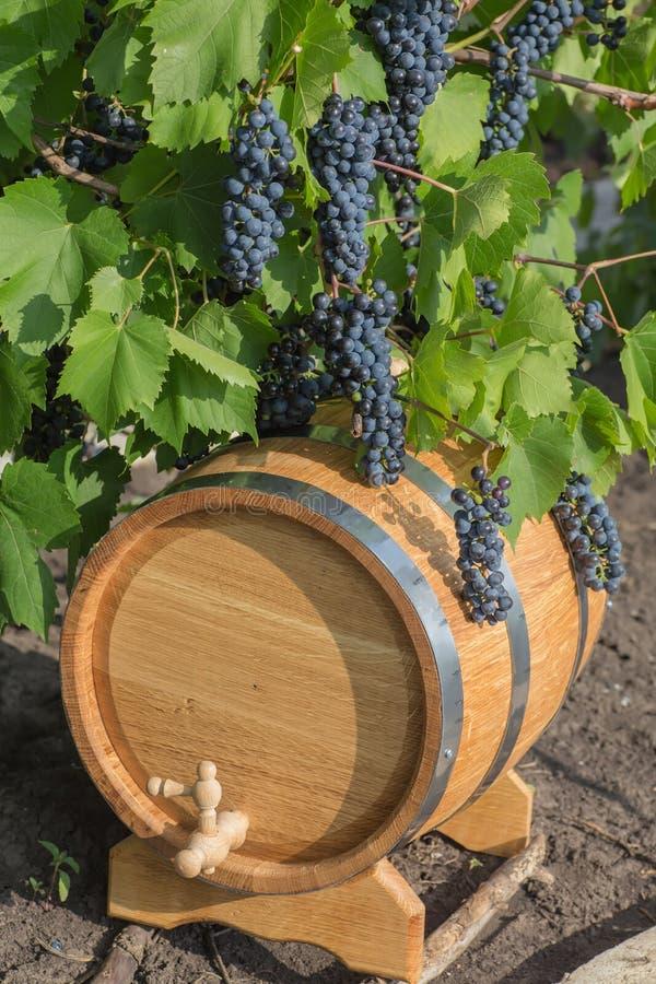 Beeld van druiven op een vat stock foto's