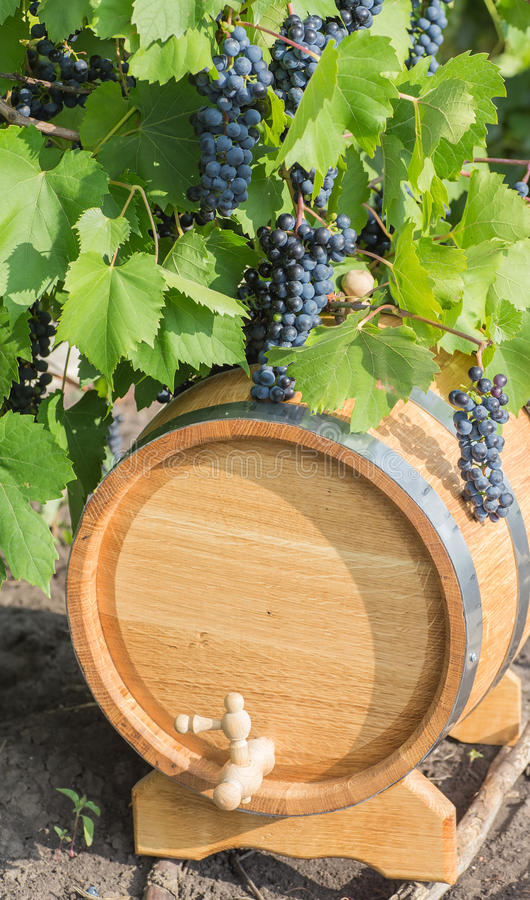 Beeld van druiven op een vat stock afbeeldingen