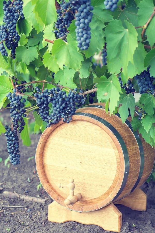Beeld van druiven op een vat royalty-vrije stock afbeelding
