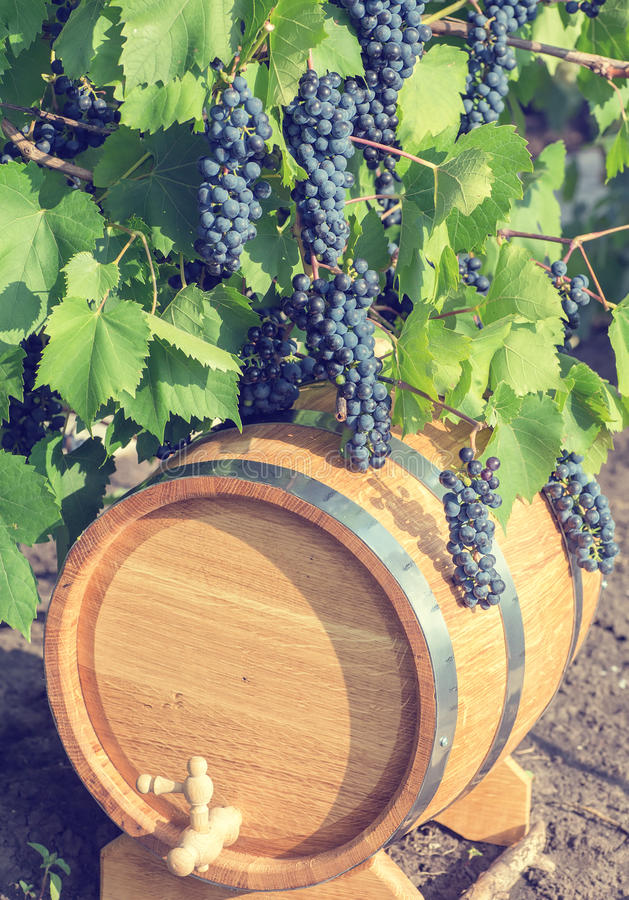 Beeld van druiven op een vat royalty-vrije stock afbeeldingen