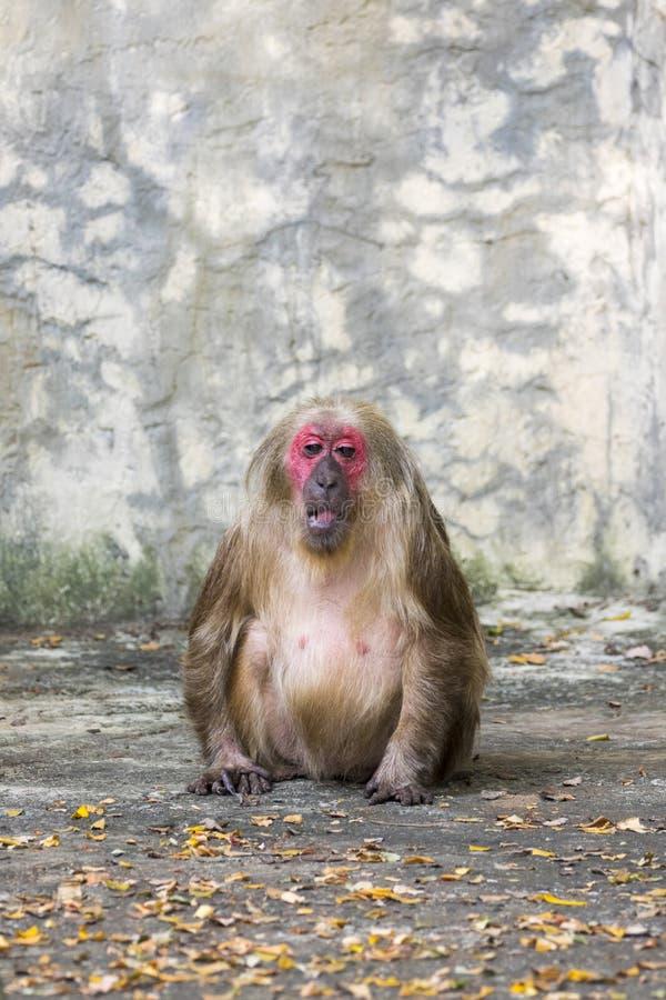 Beeld van een aap op aardachtergrond Wilde dieren royalty-vrije stock foto's