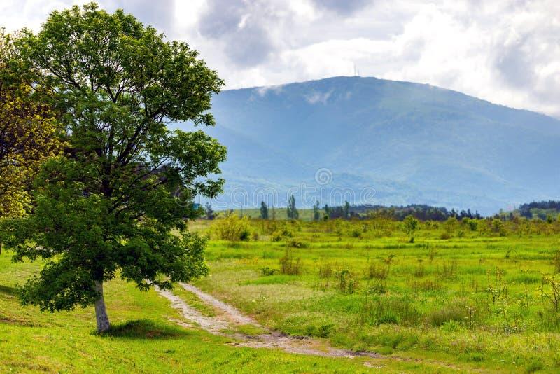 Beeld van een mooie alleen boom met grote kroon in de lente en landweg in bergen met wolken op achtergrond stock afbeelding