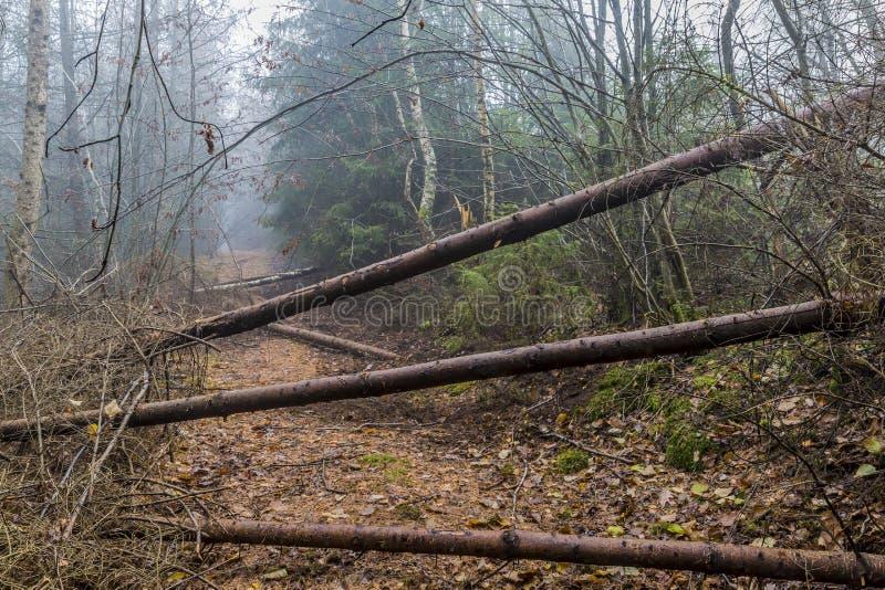 Beeld van een sleep door gevallen boomboomstammen wordt belemmerd in het bos dat stock fotografie