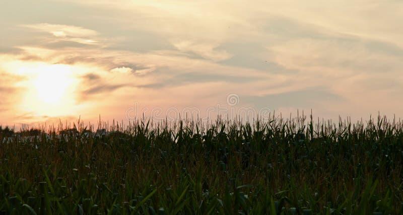 beeld van een verbazende zonsondergang op een gebied stock afbeelding