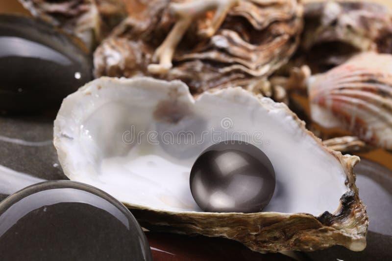 Beeld van een zwarte parel in shell royalty-vrije stock afbeelding