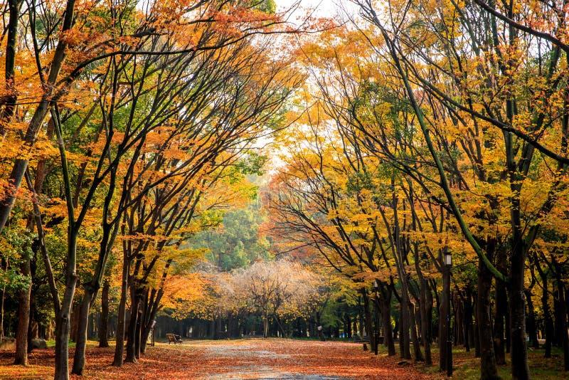 Beeld van gebied in het kasteel van Osaka, Osaka, Japan bij de herfst royalty-vrije stock afbeelding