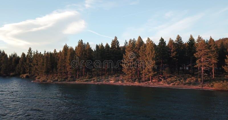 Beeld van het bos op de kust van Meer Tahoe stock fotografie