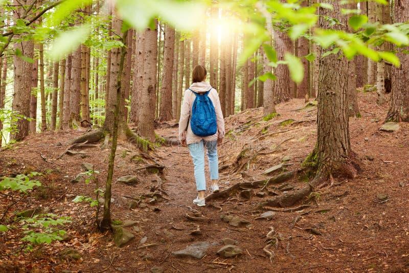 Beeld van het jonge vrouw rusten die voor gang in bos, dragende blauwe terloops geklede rugzak gaan, zijnd in hout op zonsonderga royalty-vrije stock foto