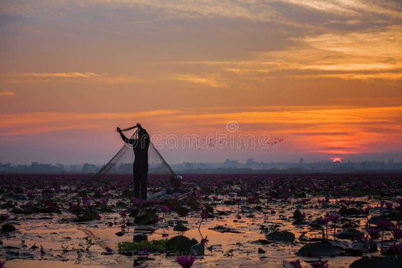 Beeld van het mooie gebied van de lotusbloembloem bij het rode lotusbloemoverzees stock afbeelding