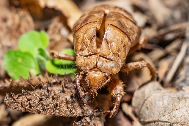 Beeld van insectshell exoskeleton royalty-vrije stock afbeelding