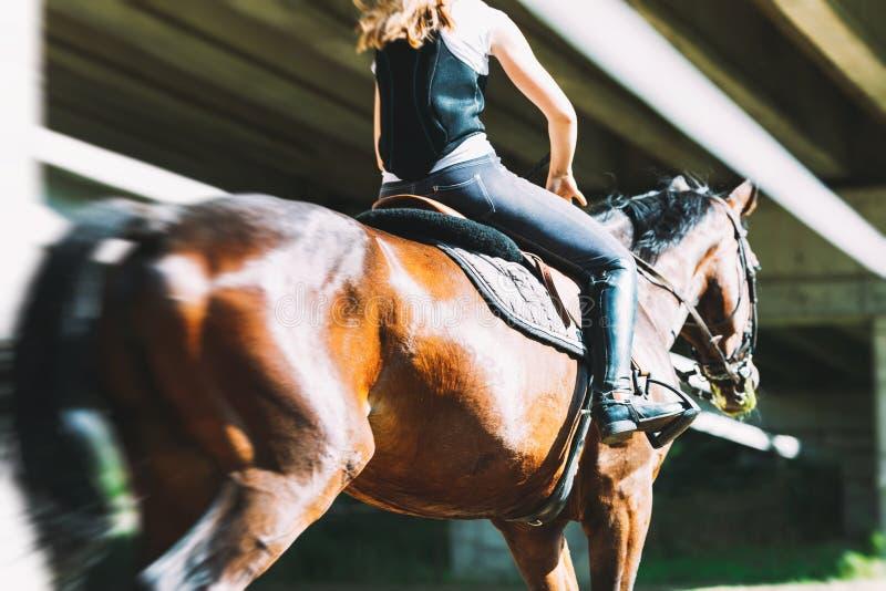 Beeld van jong mooi meisje het berijden paard stock fotografie