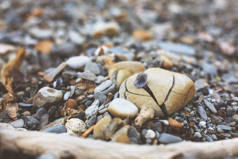 Beeld van leuk weinig Overzeese shell op de gebroken overzeese rots op de achtergrond van het zandstrand Kiezelsteentextuur stock foto's