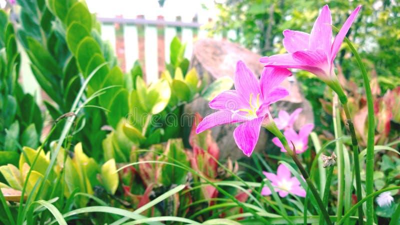 Beeld van lichtrose bloemenachtergrond/Romantisch bloemontwerp stock afbeeldingen