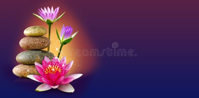 beeld van lotusbloembloem en stenenclose-up stock afbeeldingen