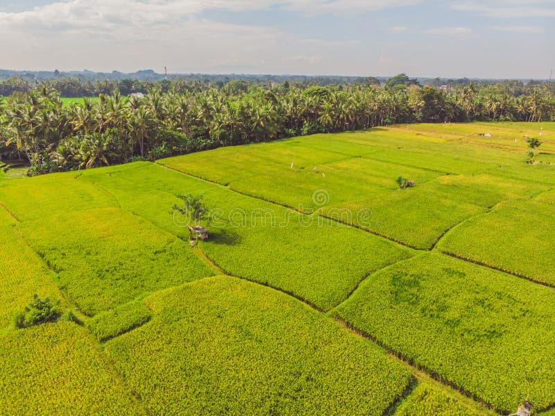 Beeld van mooi Terrasvormig padieveld in waterseizoen en Irrigatie van hommel, Hoogste mening van rijstpadie stock fotografie