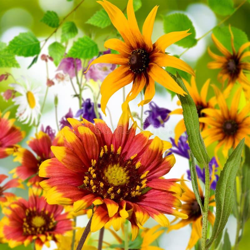 Beeld van mooie bloemen in de tuinclose-up royalty-vrije stock afbeeldingen