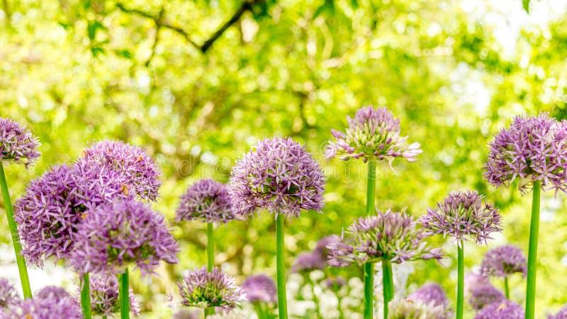 Beeld van Mooie Bloemen 1, Schot bij Koninklijke Botanische Tuinen, Kew royalty-vrije stock fotografie