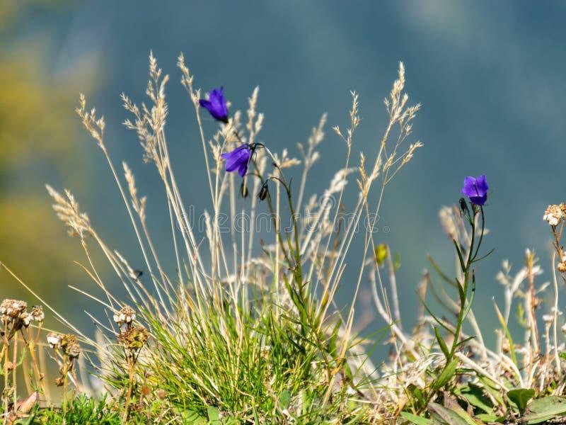 Beeld van mooie, kleine bloemen stock afbeeldingen
