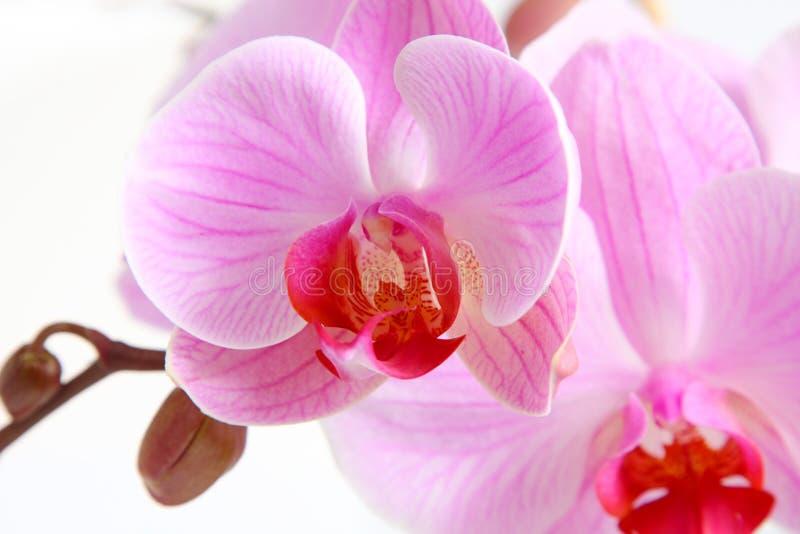Beeld van orchideebloem royalty-vrije stock foto