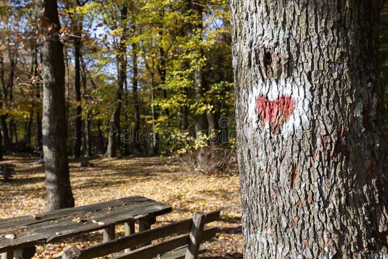 Beeld van rood die hart op boom wordt geschilderd royalty-vrije stock fotografie