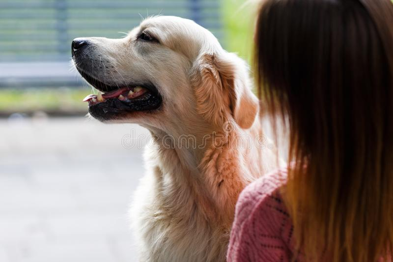 Beeld van rug van vrouw met Labrador stock afbeeldingen