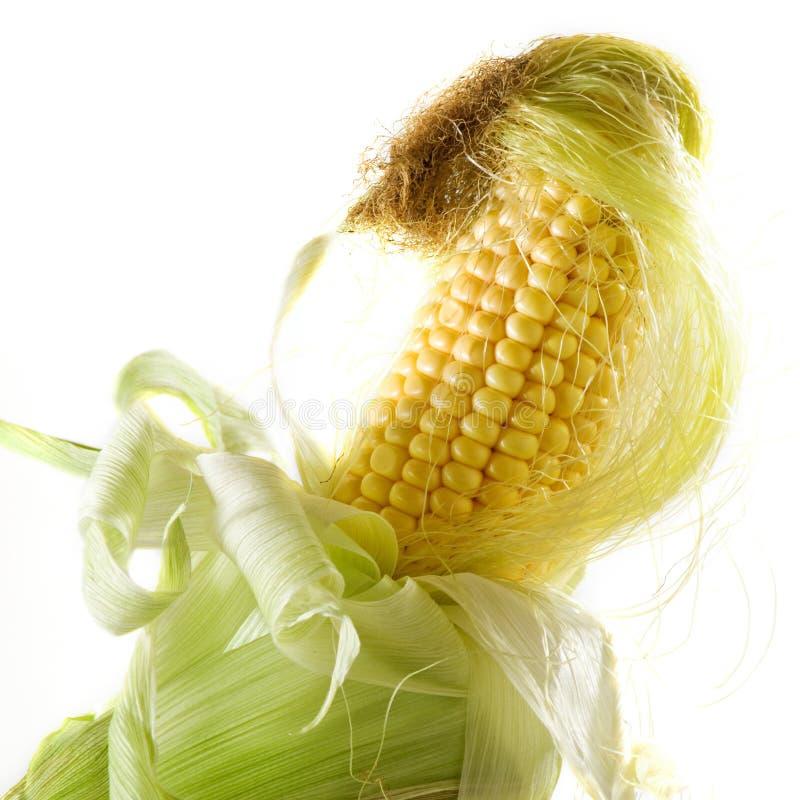 Beeld van smakelijke rijpe graanclose-up stock fotografie