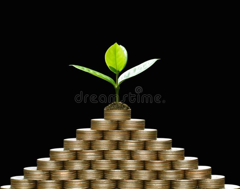 Beeld van stapel van muntstukken met installatie op bovenkant voor zaken, besparing, de groei, economisch concept stock foto