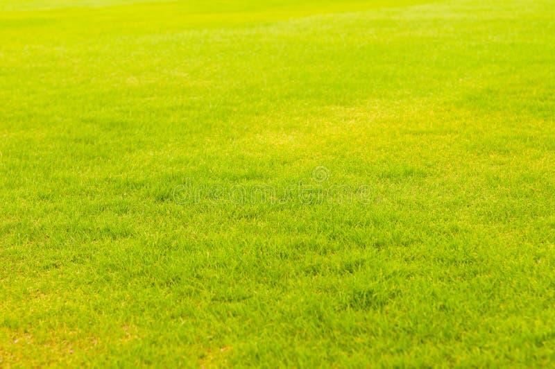Beeld van vers de lente groen gras royalty-vrije stock foto
