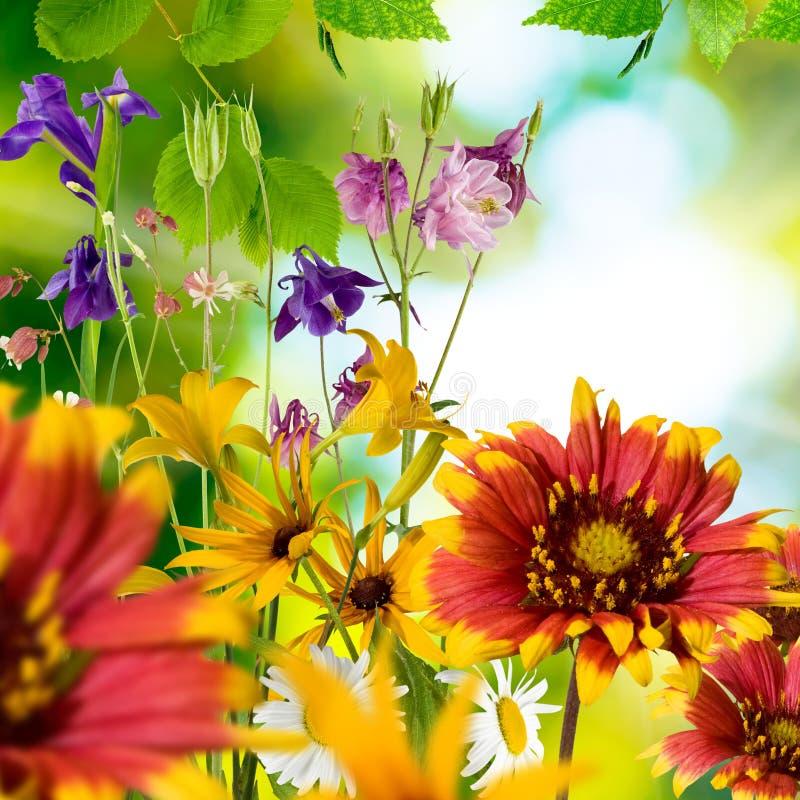 Beeld van verschillende mooie bloemen in de tuin royalty-vrije stock foto's