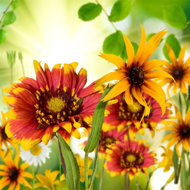 Beeld van verschillende mooie bloemen in de tuinclose-up stock afbeeldingen