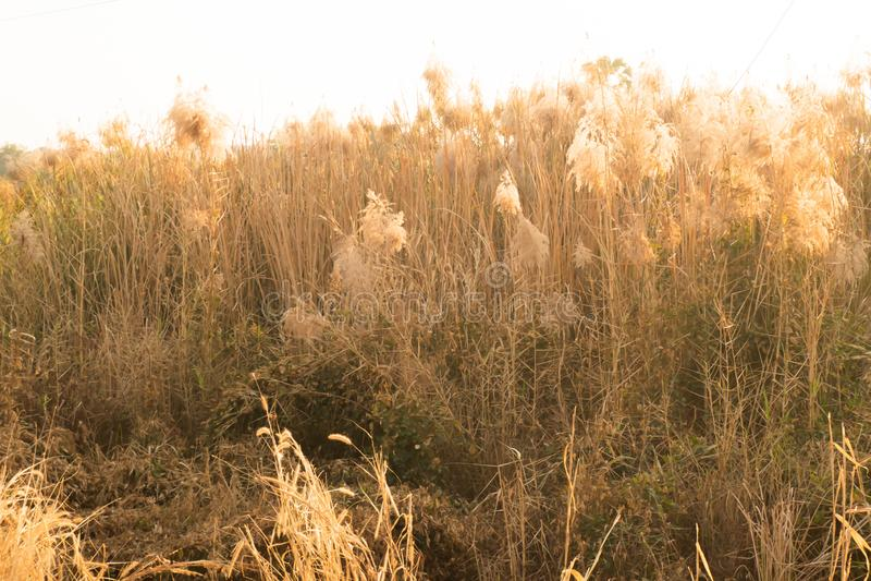 Beeld van wilde grassen, kleine velddiepte Uitstekend Effect Mooie landelijke aard royalty-vrije stock afbeeldingen
