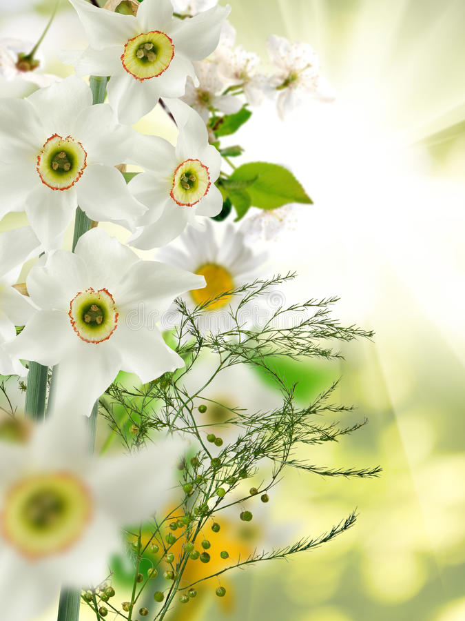 Beeld van witte mooie bloemen in de tuinclose-up royalty-vrije stock fotografie
